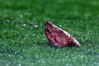 translation not available – November, 23rd 2002. Figo goes back to F.C. Barcelona's stadium for the first time after departuring the club to join Real Madrid. Any kind of objects are thrown to the play field, including this pig head